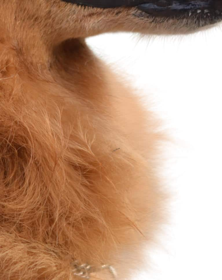 Photoshop Compositing Masking and Cutting Out Dog Example Detail